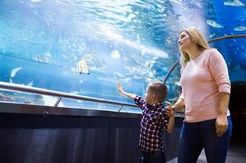 aquariums et viviers